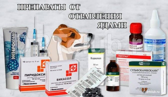 Чем лечить кошку при отравлении крысиным ядом