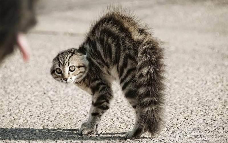 Как наказать кошку за плохое поведение, и стоит ли это делать?