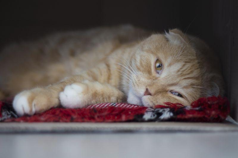 Как распознать стресс у кошки: симптомы, признаки, лечение