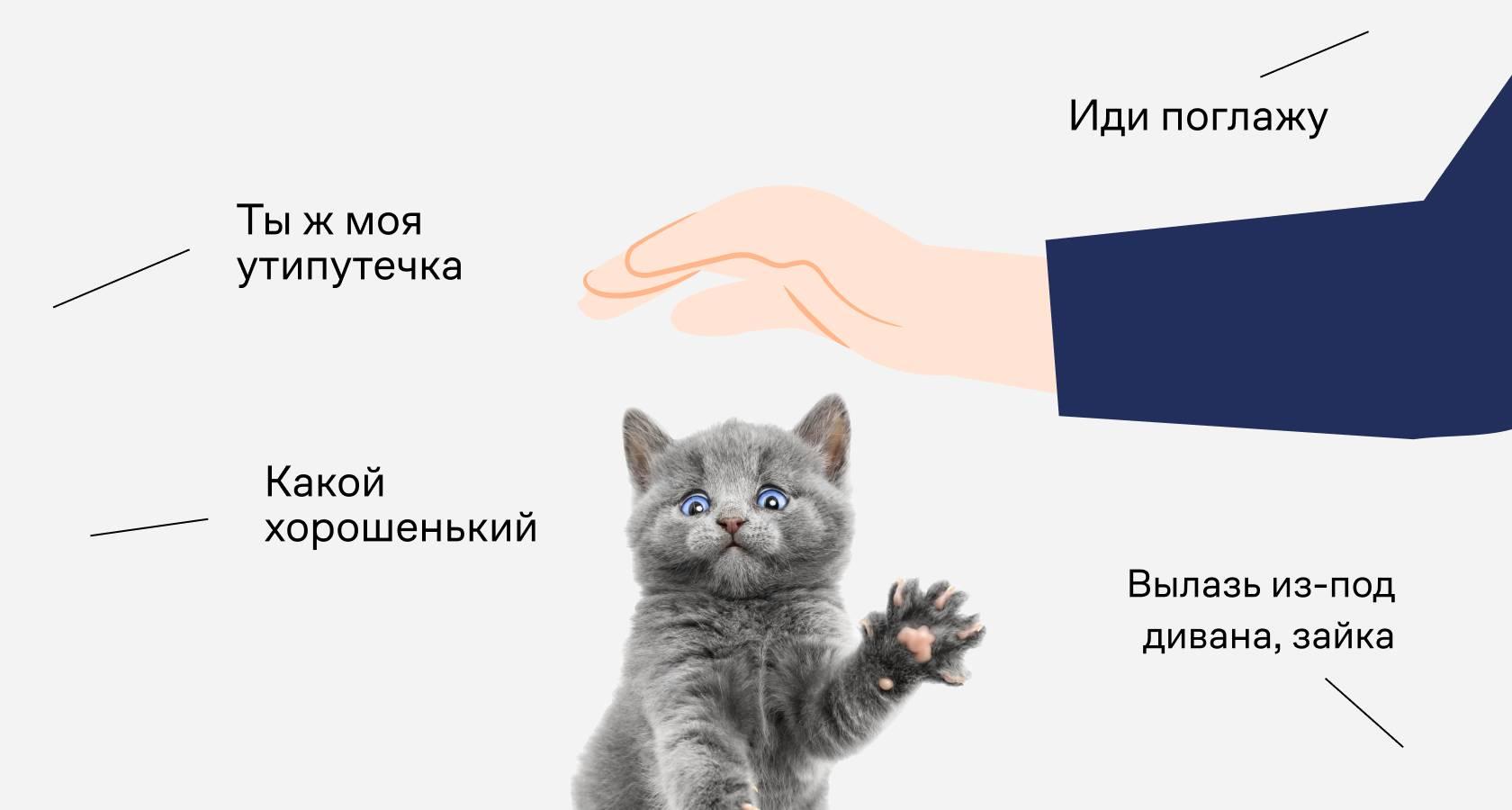 Кот или кошка шипит на хозяина — что делать?   zdavnews.ru