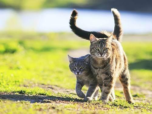 Чем полезны кошки для человека, польза кота в доме