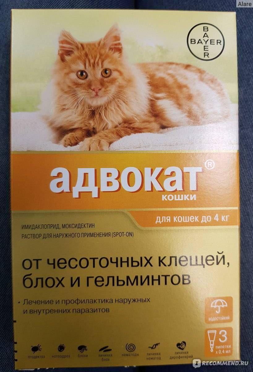 Капли от блох и глистов для кошек - обзор средств