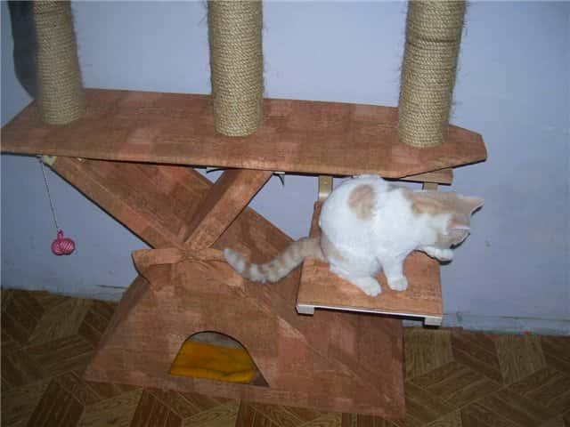 Как сделать игрушку для кота своими руками из носков, бумаги, труб в домашних условиях