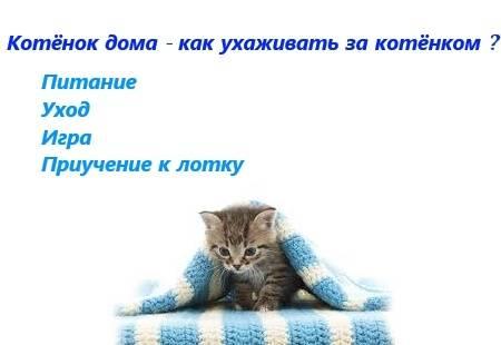 Уход за новорожденным котенком: как и чем кормить без кошки, как часто, использование шприца и другие особенности