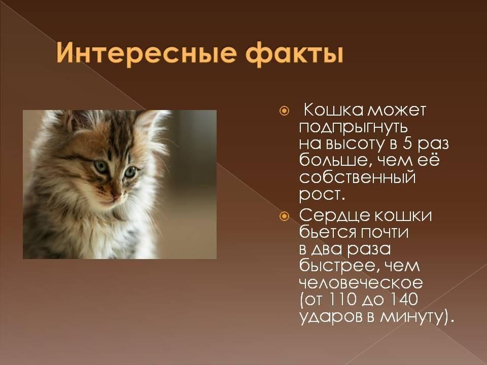 Советы, статьи и интересные факты о кошках