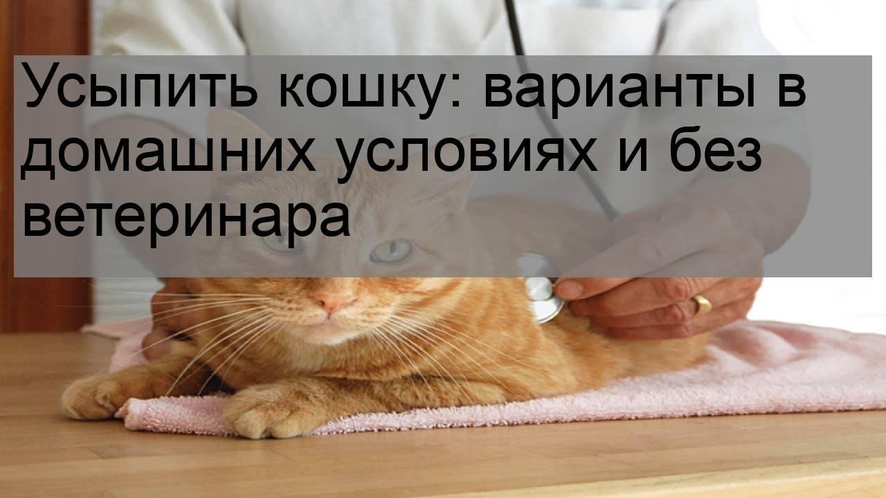 Усыпление кошек на дому в москве