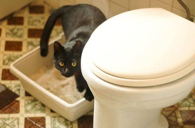 Отучаем кошку писать в неположенном месте: народные средства и советы специалиста