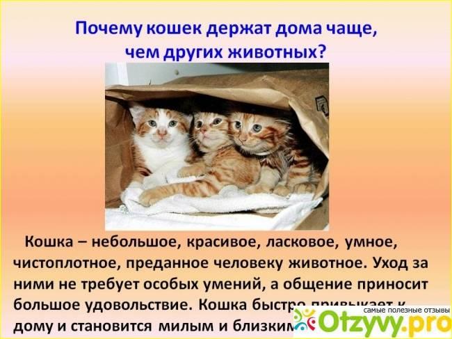 Рыжий кот в доме: приметы и поверья, что означает по суевериям