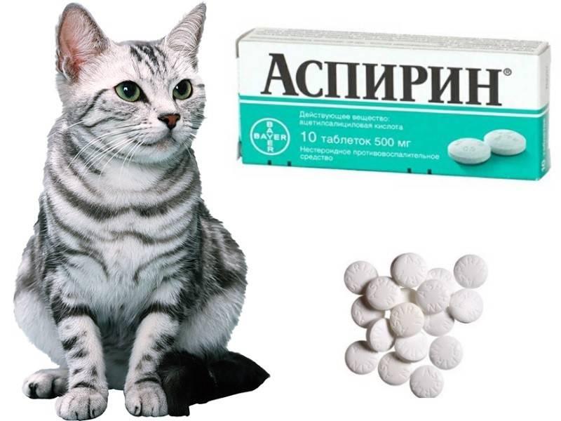Очень активный и игривый котенок - почему он носится как сумасшедший?