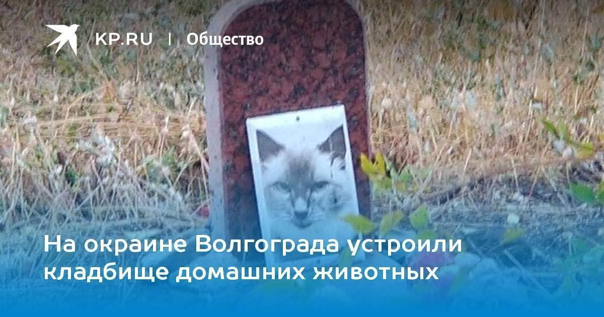 Кремация кошек