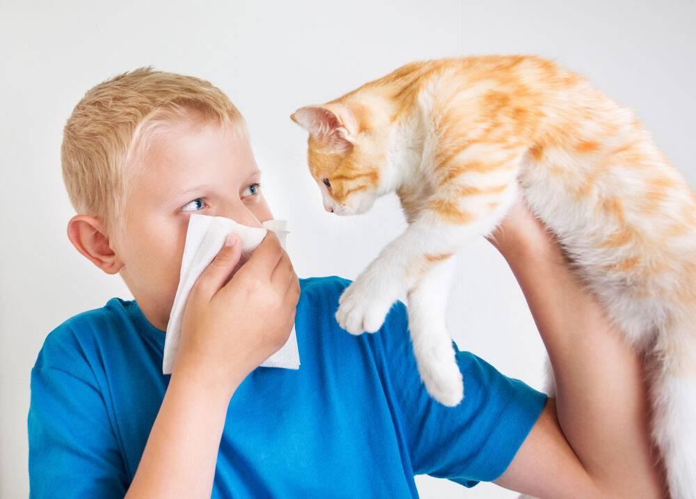 Виды аллергии на кошек и котов: какие есть и как с ними бороться
