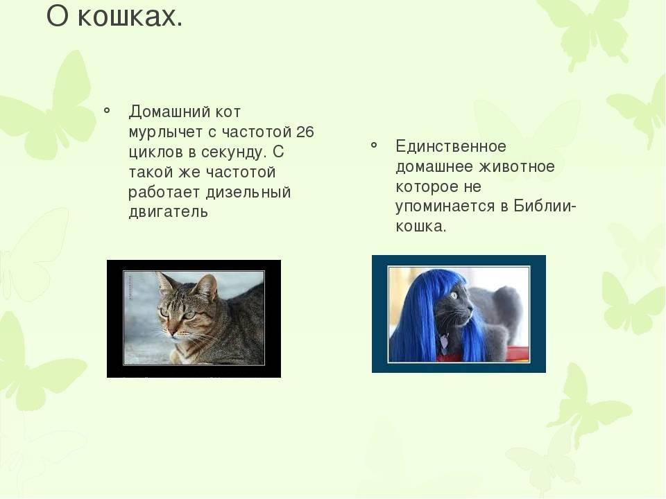 Почему кошки мурлыкают? почему мурлыкают коты и кошки и что означает это мурлыканье, может ли «урчальник» сломаться и что в этом случае делать? когда кошки мурлыкают.