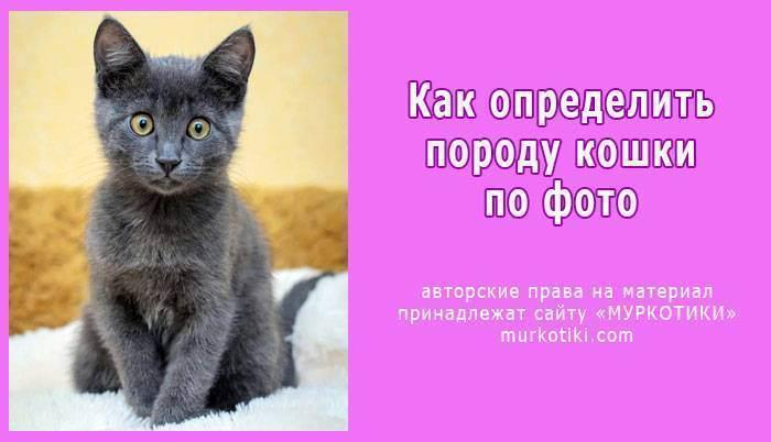 Как определить пол котёнка