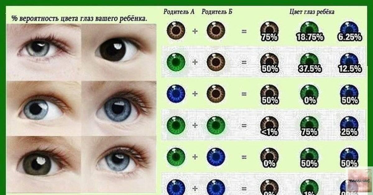Во сколько месяцев у котят меняется цвет глаз