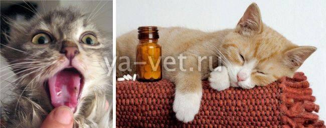 Простуда у кошек и котов