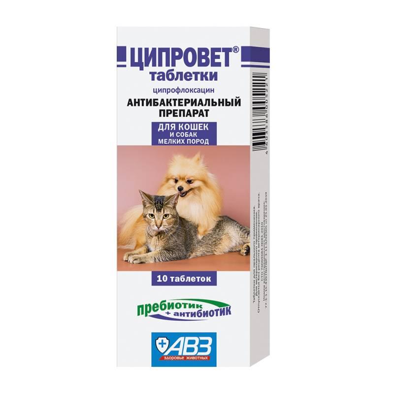 Антибиотиками кошек можно лечить