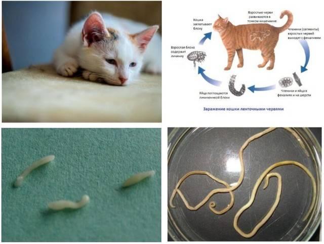 Почему кошка не дает себя гладить: причины