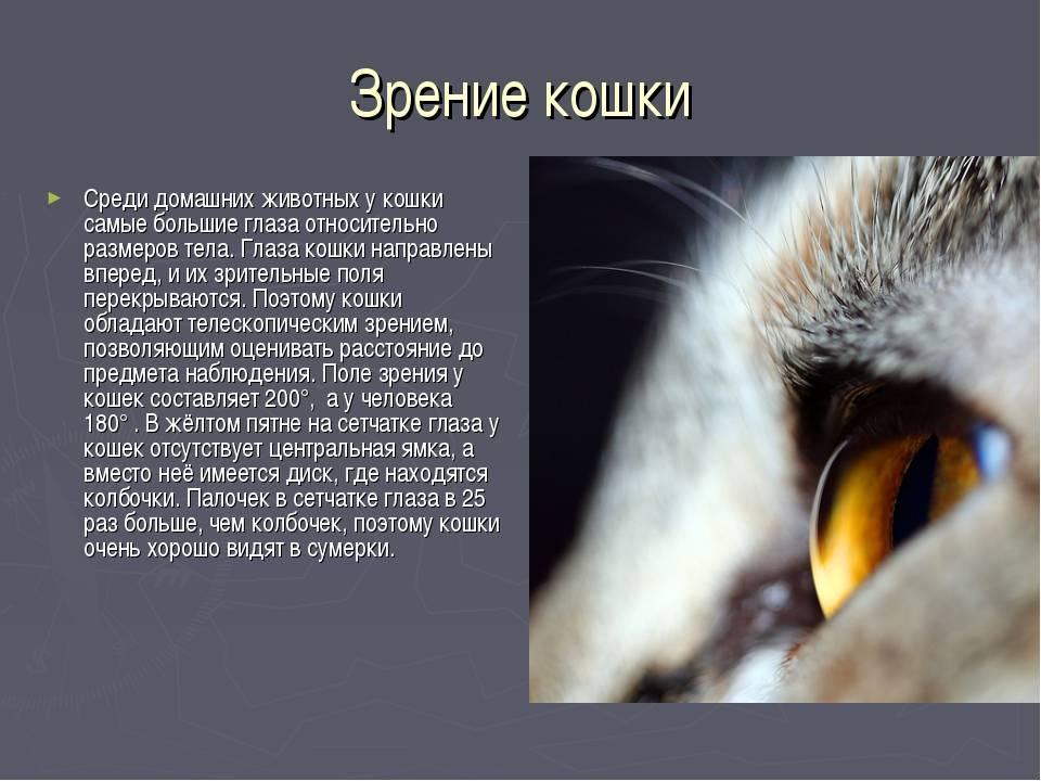 В каком цвете видят кошки окружающий мир? - zhivomag
