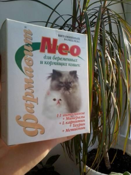 Как выбрать витамины для кошек