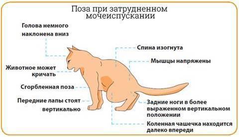 Мочекаменная болезнь у кошек   заметки ветеринара