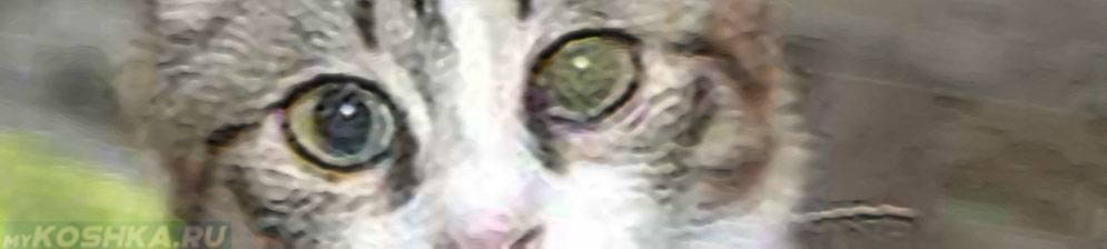 Почему у кота зрачки расширены на весь глаз и не реагируют на свет