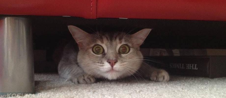 Кошка беспокойная