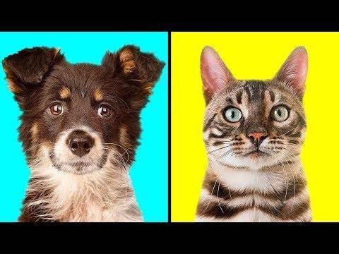Кого выбрать кошку или собаку