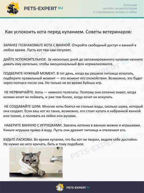 Как успокоить орущего кота?