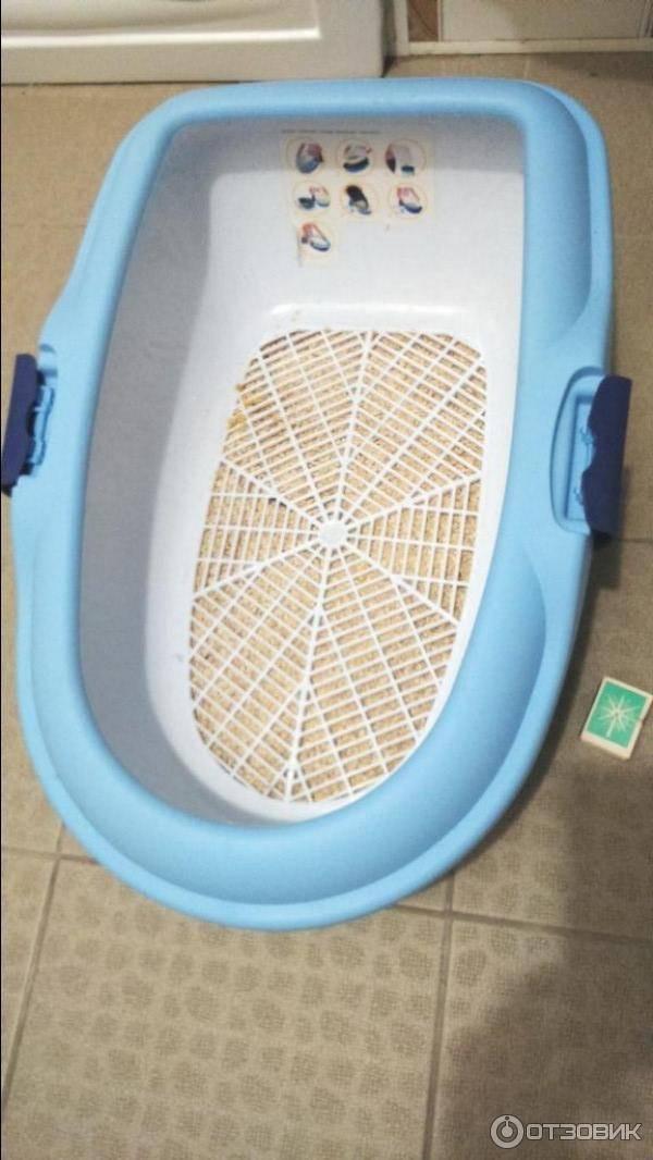 Мейн-кун: содержание (фото), насколько дорого содержать мейн-куна? особенности содержания мейн-куна? какой туалет наполнитель подойдет для мейн-куна? надо гулять с мейн-куном? породы кошки