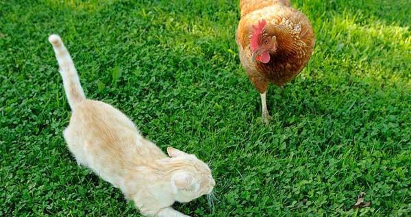 Полынь от блох: как использовать траву, отзывы