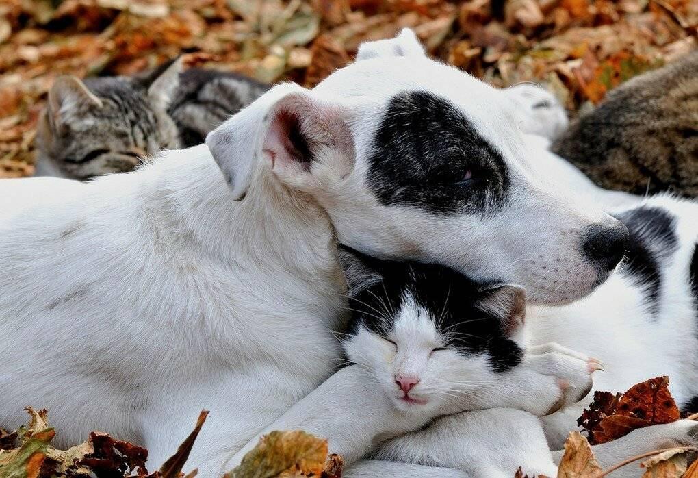 Как подружить кошку с собакой в квартире | кота или котенка