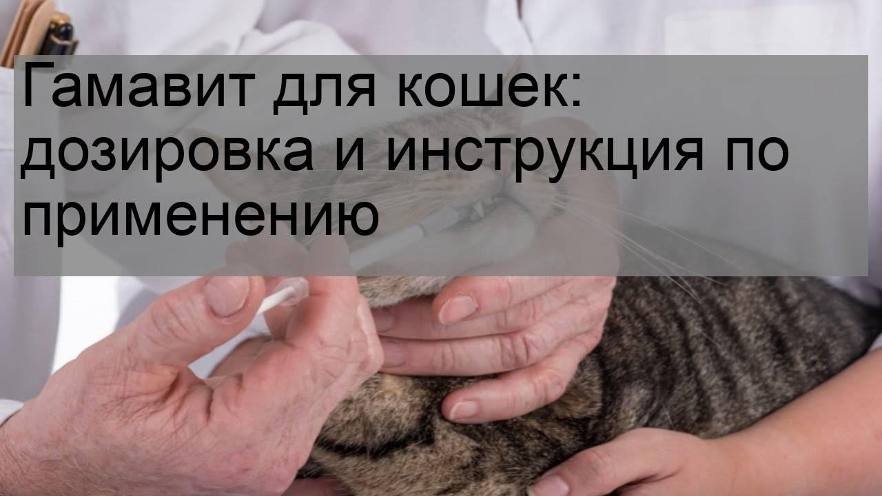 Гамавит для кошек в ампулах - инструкция по применению, показания, побочные эффекты, аналоги и цена