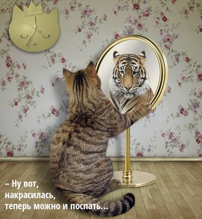 "Презентация на тему ""биомеханика кошки"""