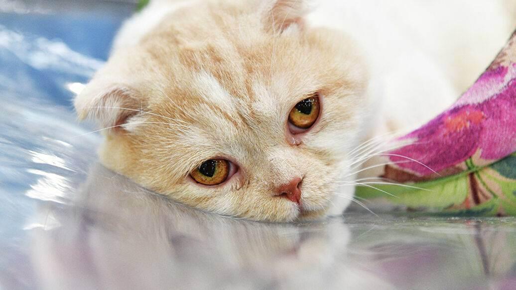 Откуда берутся вредные кошки? - про кошек - клуб домашних животных