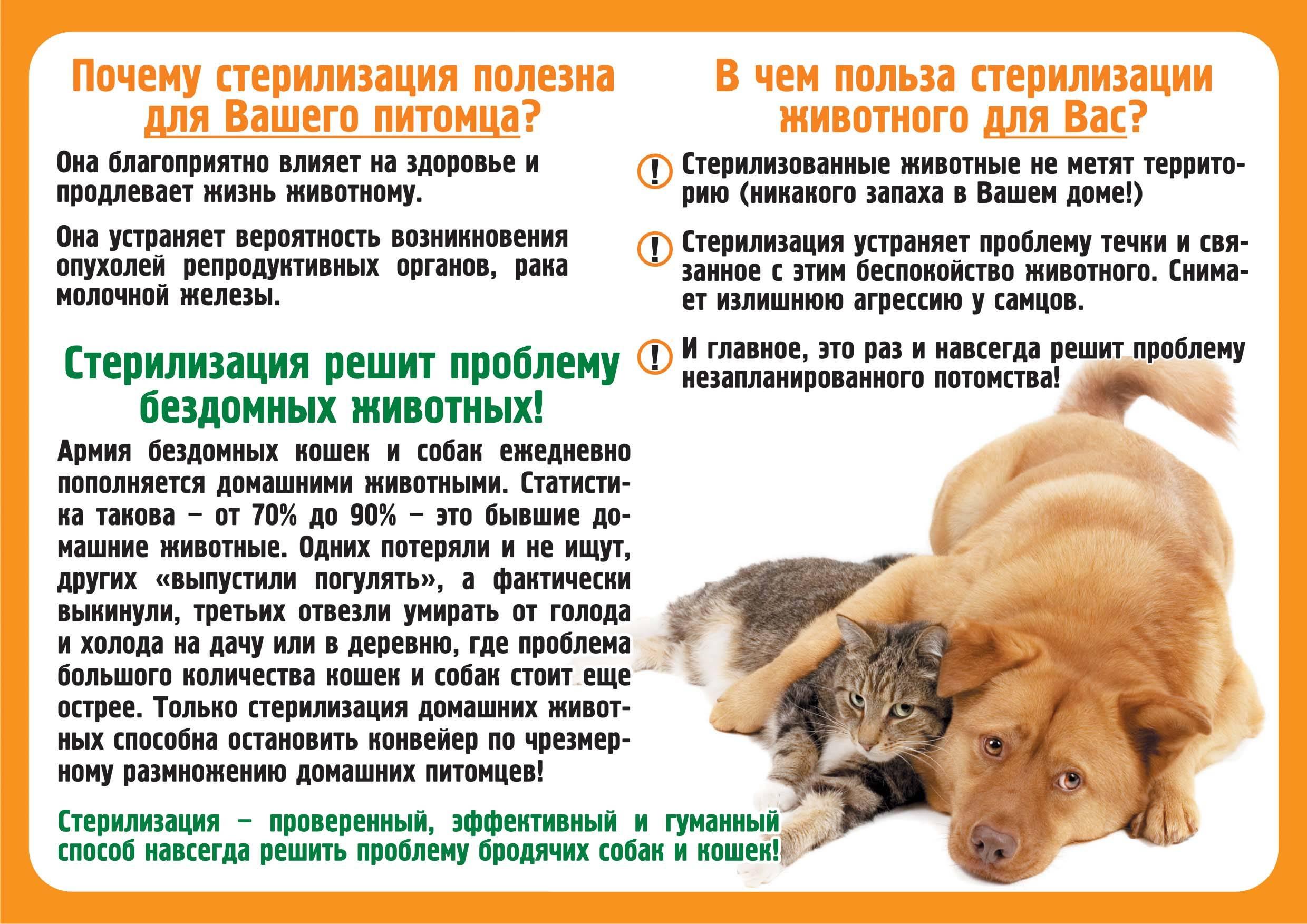 10 «нельзя» для хозяина кошки. уход, питание, кормление