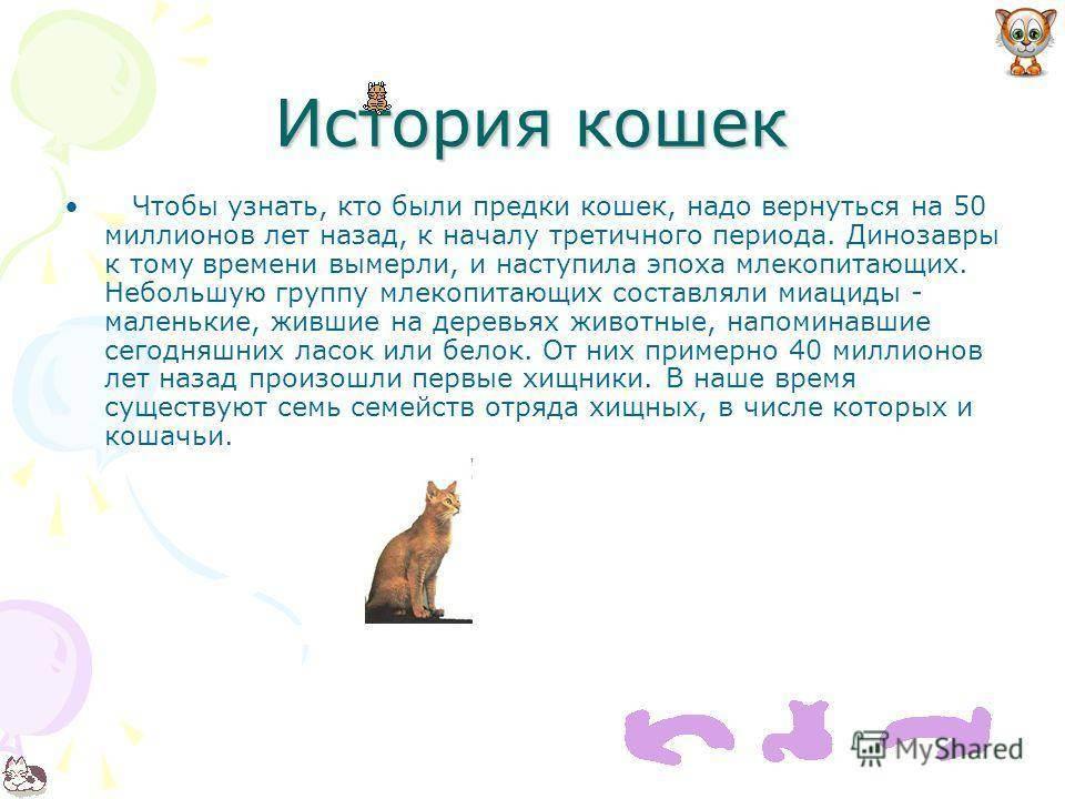 Распространение кошек по миру