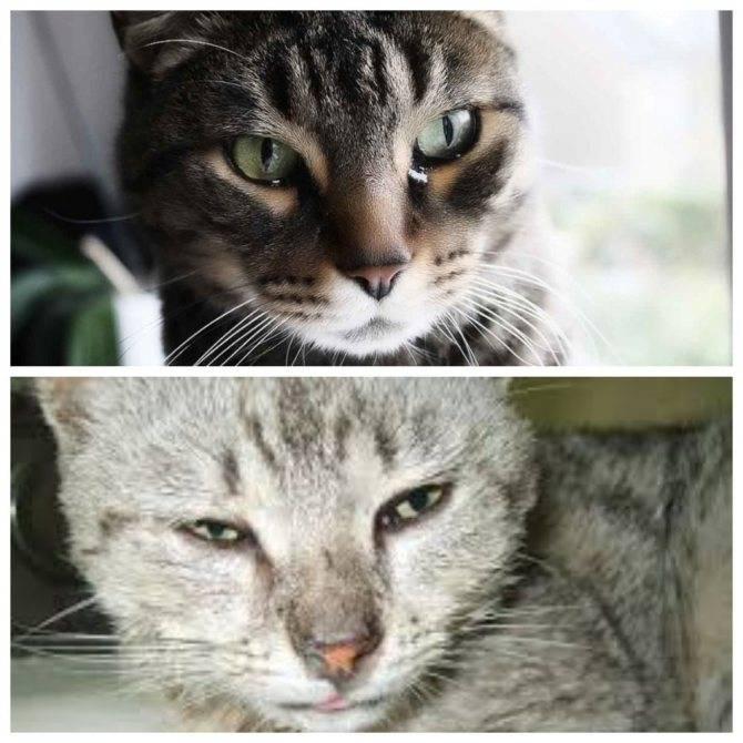 Котенок чихает: сопутствующие симптомы, виды заболеваний, лечение