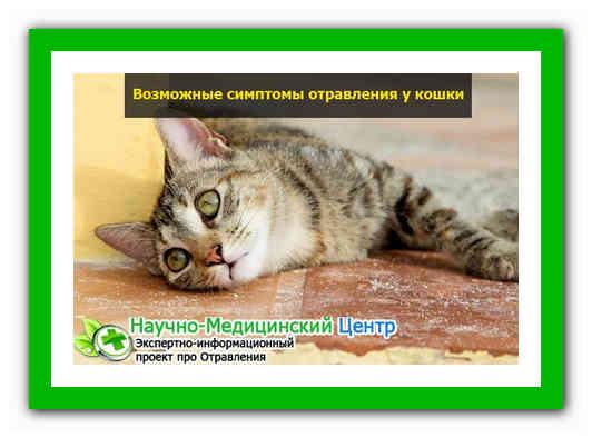 Признаки отравления у кота