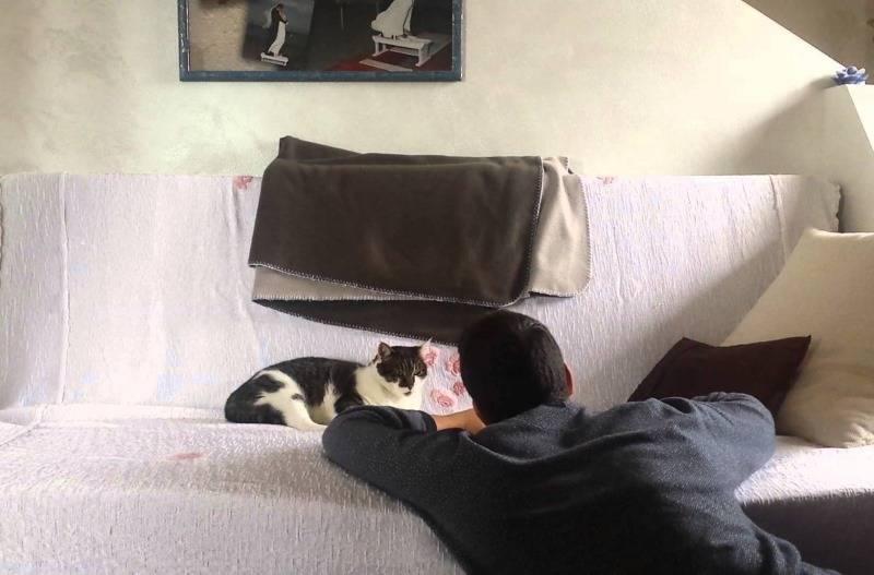 Почему кошка ложится на человека: на грудь, в ноги, возле головы – мистическое объяснение и реальные причины
