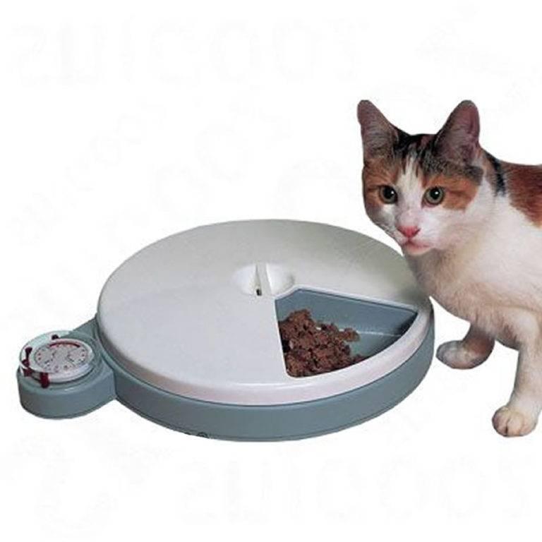 Кормушка для кошек: разбираем со всех сторон