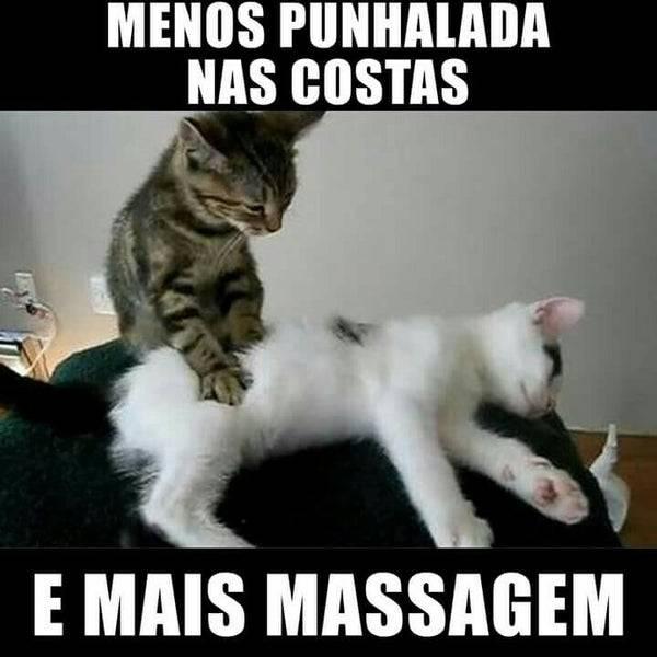 Зачем кошки мнут лапами человека, будто делают массаж, что это значит?