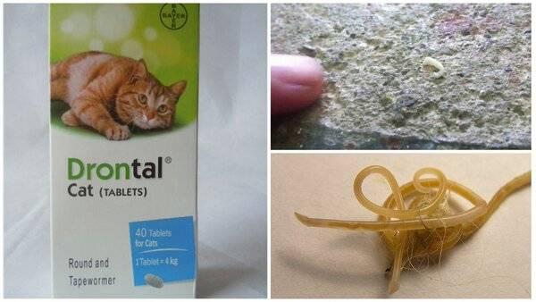 Таблетка от глистов для кошек – какие есть и как принимать