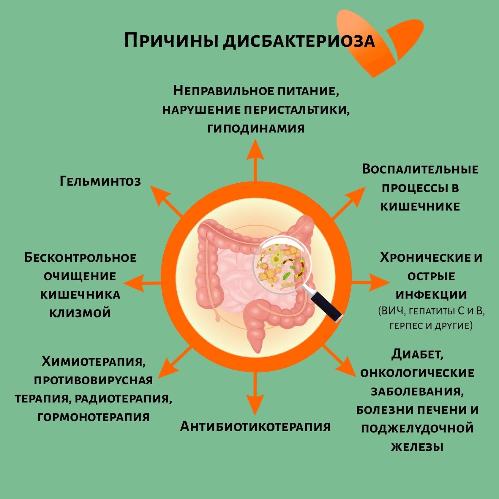 Дисбактериоз у кошек — причины, лечение и последствия