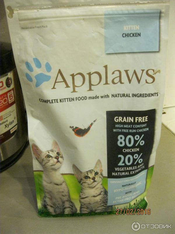 Как ухаживать за котом породы мейн-кун особенности содержания питомца в квартире