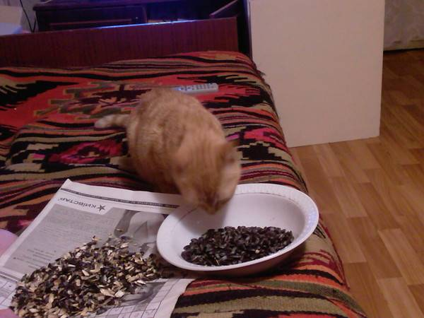 Почему кот постоянно просит есть и что с этим делать?