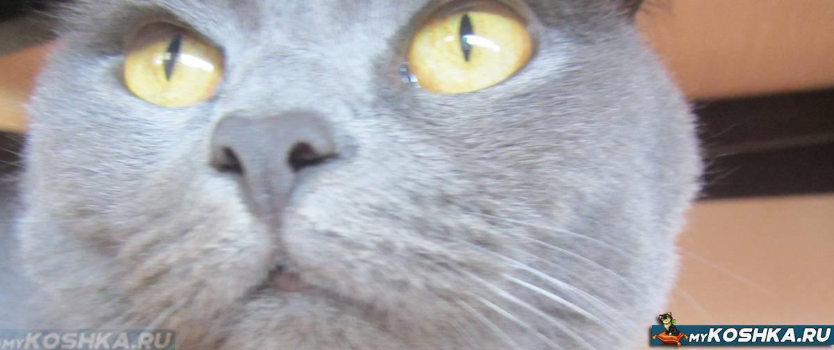У кошки заложен нос: причины и лечение насморка