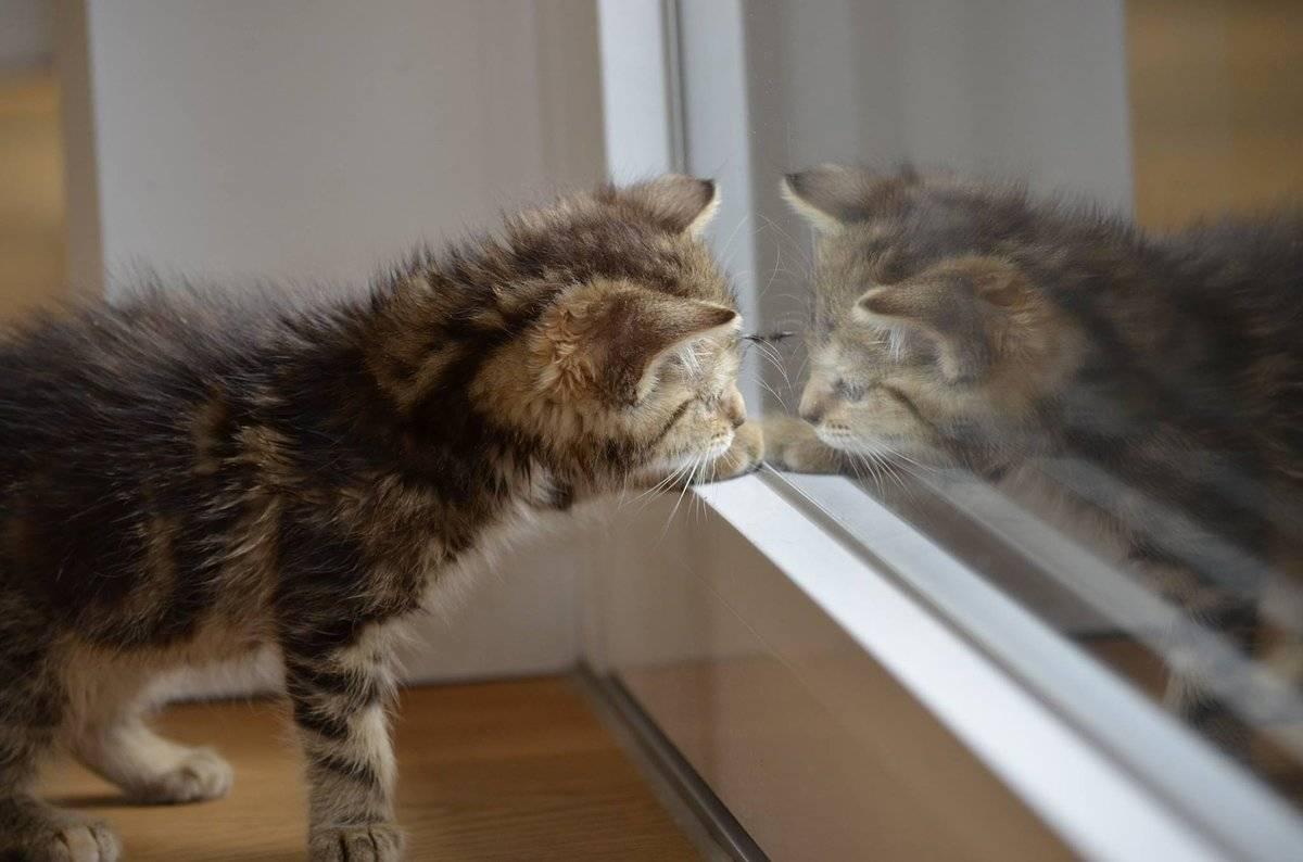 Как ухаживать за котёнком:  новорожденным, в 1 и 2 месяца, без кошки