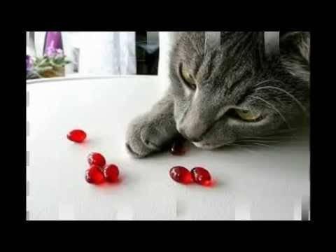 Что такое таурин, его польза и вред для кошек