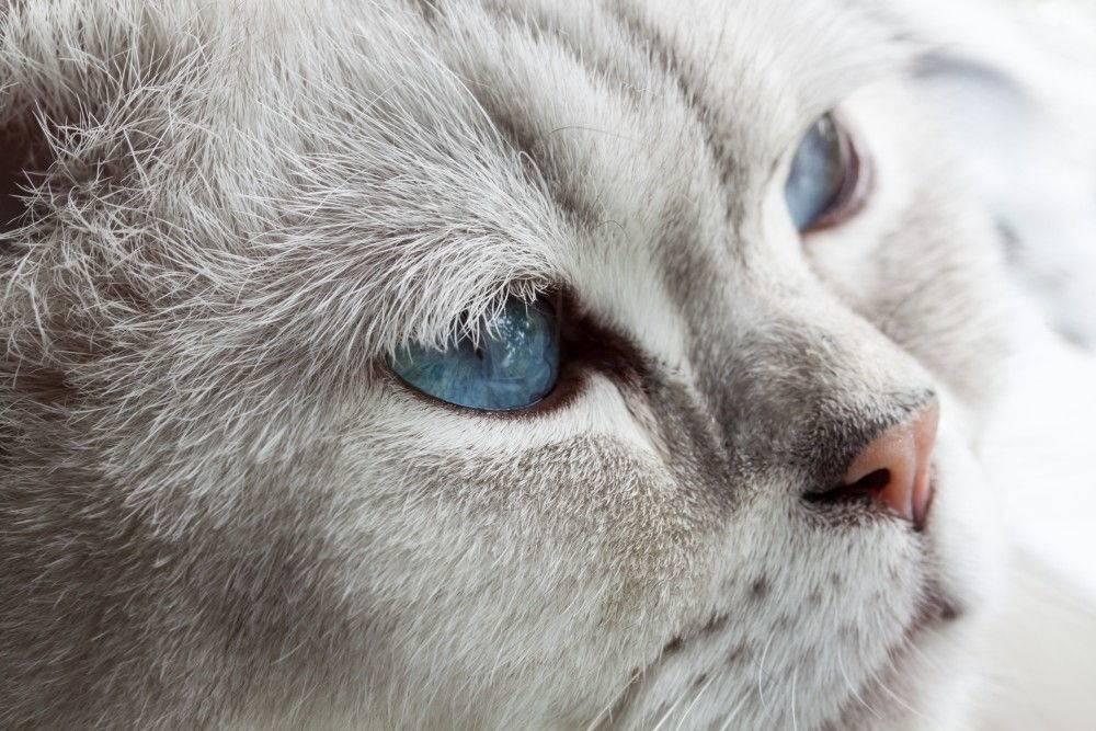 Почему у кошки слезятся глаза: что делать, причины, лечение