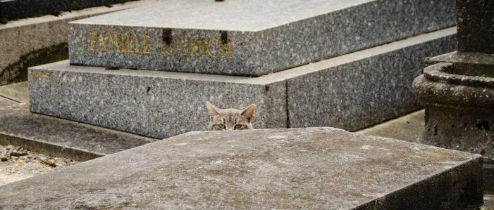 Можно ли самим хоронить кота. где и как правильно похоронить кошку (деликатная тема). городские или сельские условия